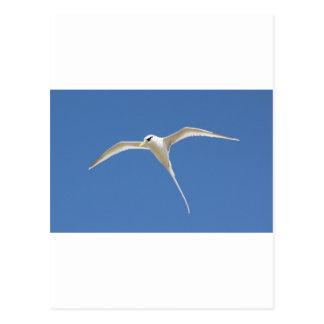 Carte Postale Oiseau Paille en Queue Ile Maurice