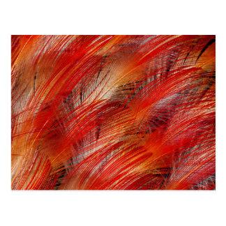 Carte Postale Oiseau rouge d'abrégé sur plume de paradis