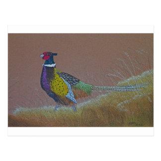 Carte Postale Oiseau sauvage de faisan de cou d'anneau