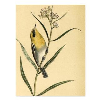 Carte Postale Oiseau vintage de fauvette jaune