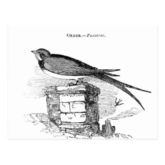 Carte Postale Oiseau vintage d'hirondelle