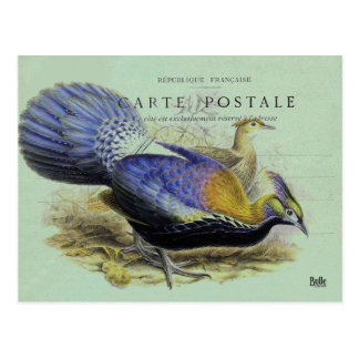 Carte postale oiseau violet