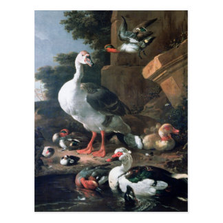 Carte Postale Oiseaux aquatiques dans un paysage classique,