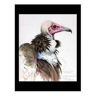 Carte Postale Oiseaux Art-Abyssiniens 10 de Chicago de Carte-Cru