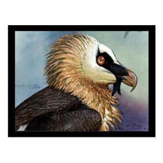 Carte Postale Oiseaux Art-Abyssiniens 11 de Chicago de Carte-Cru