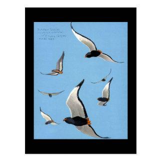 Carte Postale Oiseaux Art-Abyssiniens 13 de Chicago de Carte-Cru