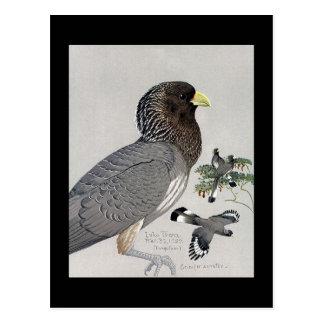 Carte Postale Oiseaux Art-Abyssiniens 14 de Chicago de Carte-Cru