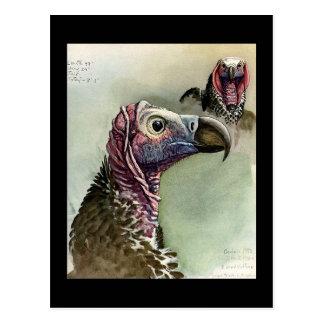 Carte Postale Oiseaux Art-Abyssiniens 15 de Chicago de Carte-Cru