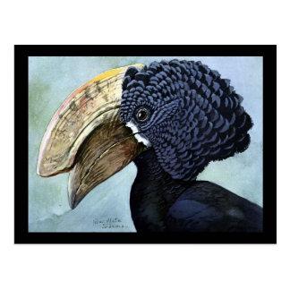 Carte Postale Oiseaux Art-Abyssiniens 16 de Chicago de Carte-Cru