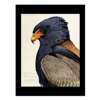 Carte Postale Oiseaux Art-Abyssiniens 18 de Chicago de Carte-Cru