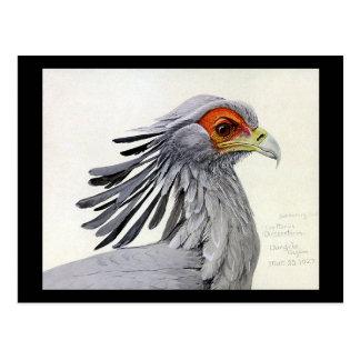Carte Postale Oiseaux Art-Abyssiniens 19 de Chicago de Carte-Cru