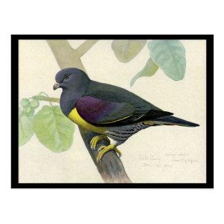 Carte Postale Oiseaux Art-Abyssiniens 1 de Chicago de Carte-Cru