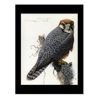 Carte Postale Oiseaux Art-Abyssiniens 2 de Chicago de Carte-Cru