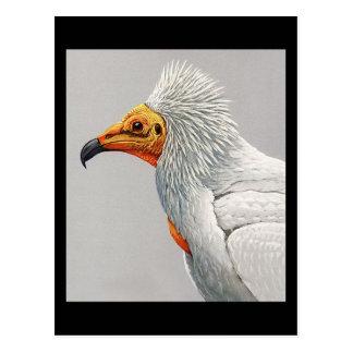 Carte Postale Oiseaux Art-Abyssiniens 3 de Chicago de Carte-Cru