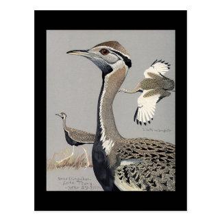 Carte Postale Oiseaux Art-Abyssiniens 4 de Chicago de Carte-Cru