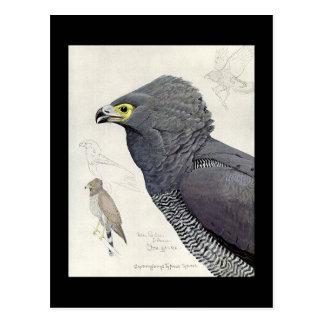 Carte Postale Oiseaux Art-Abyssiniens 6 de Chicago de Carte-Cru