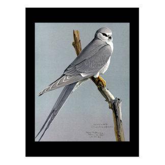 Carte Postale Oiseaux Art-Abyssiniens 8 de Chicago de Carte-Cru