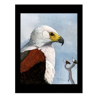 Carte Postale Oiseaux Art-Abyssiniens 9 de Chicago de Carte-Cru