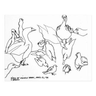 Carte Postale Oiseaux au parc de Mingus, baie de roucoulements,