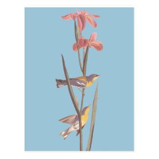 Carte Postale Oiseaux bleus de chanson de fauvette de Yellowback