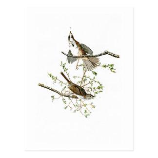 Carte Postale Oiseaux de John James Audubon de moineau de