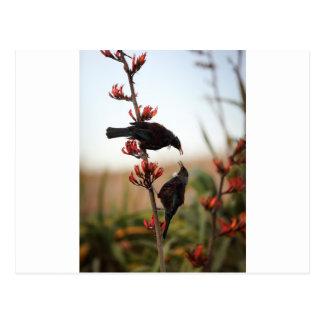 Carte Postale Oiseaux de Tui sur le buisson de lin de la