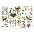 Carte Postale oiseaux et fleurs botaniques français vintages