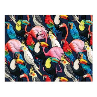 Carte Postale Oiseaux exotiques