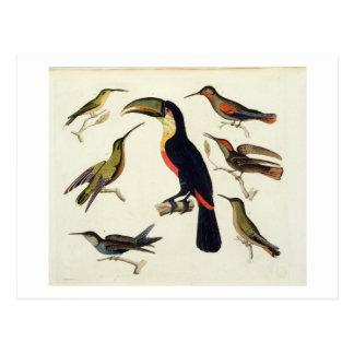Carte Postale Oiseaux indigènes, y compris le toucan (centre),
