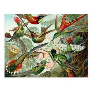Carte Postale Oiseaux vintages