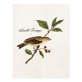 Carte Postale Oiseaux vintages d'oiseau chanteur d'oiseau de