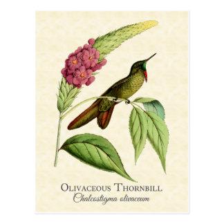 Carte postale olivacée d'art de colibri de