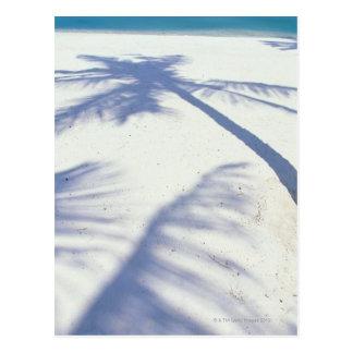 Carte Postale Ombre du palmier 2