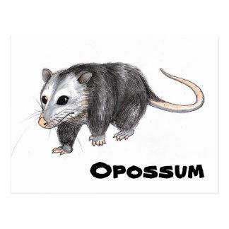 Carte Postale Opossum