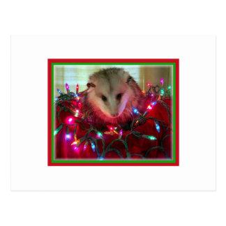 Carte Postale opossum de vacances