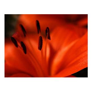Carte postale orange de fleur