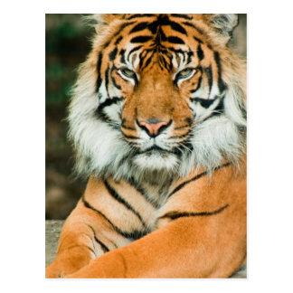 Carte postale orange de tigre