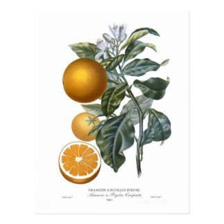 Carte Postale Orange par Pierre - Antoine Poiteau