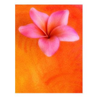 Carte Postale Orange tropicale de fleur de Frangipani de