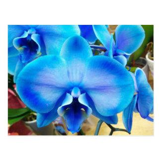Carte Postale Orchidée bleue