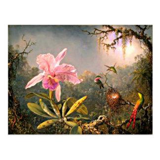 Carte Postale Orchidée de Cattleya et trois colibris