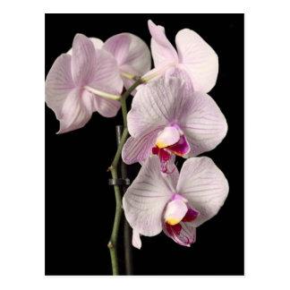 Carte Postale Orchidée de Phalaenopsis