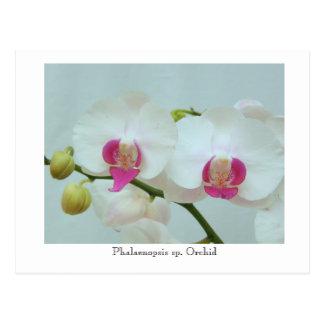 Carte Postale Orchidée d'espèces de Phalaenopsis
