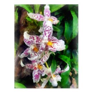 Carte Postale Orchidée élégante de Beallara