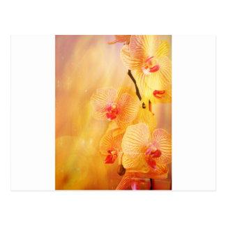 Carte Postale Orchidée rose