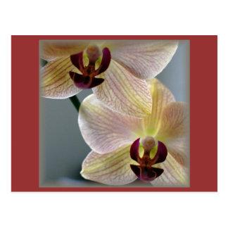 Carte Postale Orchidées