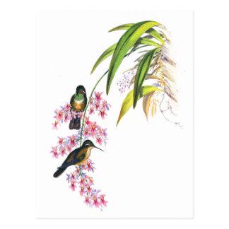 Carte Postale Orchidées et colibris roses de John Gould