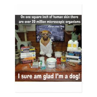 Carte Postale Organismes microscopiques de chien de la