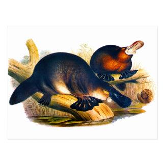 Carte Postale Ornithorynque