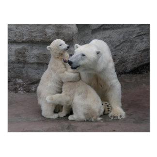 Carte Postale Ours blanc CUB et mère
